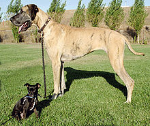 220px-Big_and_little_dog_1
