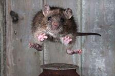 Mammal Society photographic competition, Britain - 20 Feb 2013