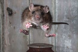 Mammal Society photographic competition, Britain - 20 Feb 2013