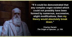 darwin-breakdown