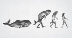 Evolution_3