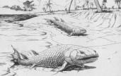 tetrapod