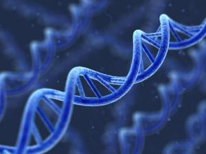DNA, Epigenome, genes