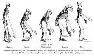 evolution_of_man