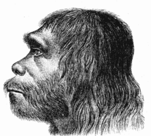 Copy (2) of 220px-Neanderthaler_Fund
