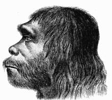 Copy (2) of 220px-Neanderthaler_Fund