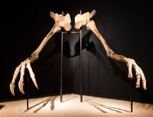 headless dino hybrid