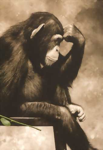 the philosophical chimp