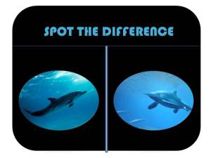 dolphins spot the difference WITH TEXT