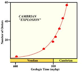 Sigmoid lag and exponential curve for the pre-cambrian and cambrian period