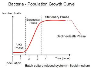 bacterial growth in closed system