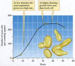 yeast growth sigmoidal curve