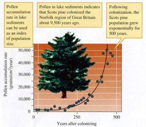 exponential growth of trees