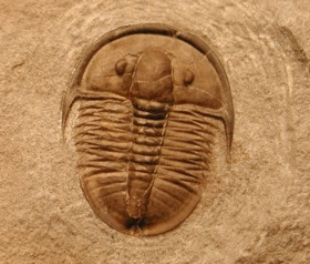Trilobite from the Cambrian c. 1/2 a billion years ago