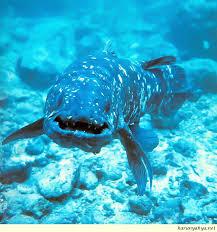 coelecanth fish