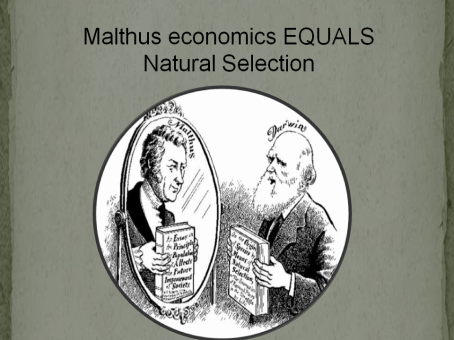 malthus and natural selection.png