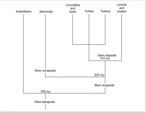 stem anapsids fig 1 Butler study 2005